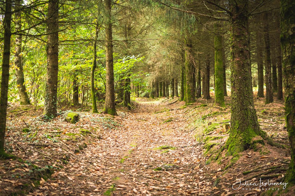 Séance photo forestière